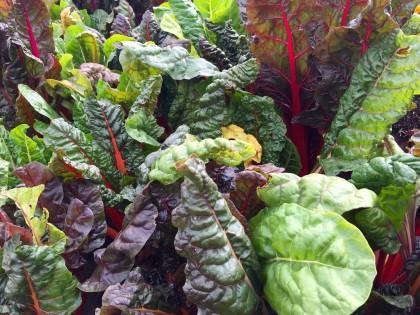 swiss chard health benefit